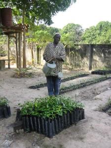 De boomkwekerij