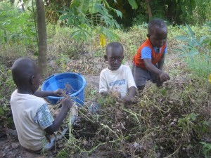 Kinderen helpen met het oogsten van pinda's