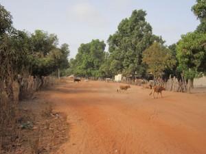 De weg die vanuit Marakissa in Darsilami komt