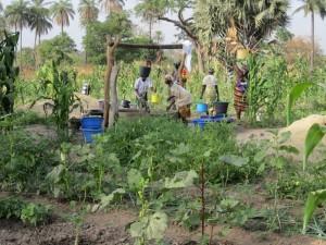 De tuin van de vrouwen in Macouda