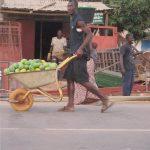 Nieuwe oogst van mango's
