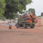 Bomen worden afgevoerd uit Darsilami